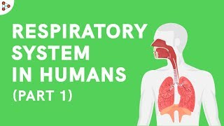 Respiratory system in Humans - Part 1 | Don't Memorise