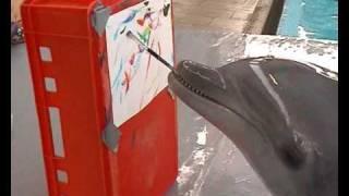 Дельфин Чики, рисующий картины
