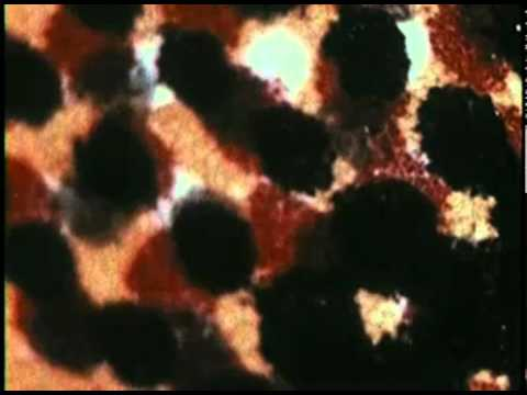 Möthersky- A Mystery in Color