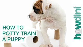 How To Potty Train a Puppy - How to House Train Yo...