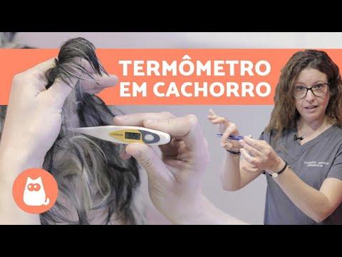 Como medir a TEMPERATURA DE UM CACHORRO com TERMÔMETRO