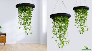 Hanging Money Plants Make Your Home Look Amazing | Idea To Growing Money Plant At Home//GREEN PLANTS