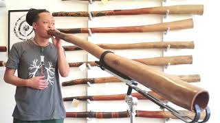 Jesse Lethbridge Didgeridoo key of D (#3991)