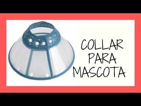 COMO HACER COLLAR ISABELINO/ COLLAR PARA MASCOTA CASERO/ CUELLO PARA GATO, PERRO
