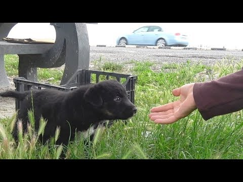 Rescue Of Three Puppies Who Didn't Know They Were Too Close To A Busy Road