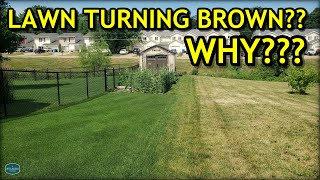 Heres WHY Your Lawn Might Be Turning BROWN...