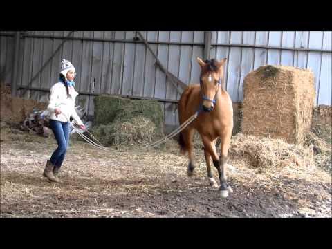 take me home- a story of a girl and a horse