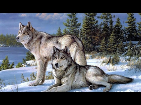 Paws by Claws ep.8 #kristina kashytska #wolf toys