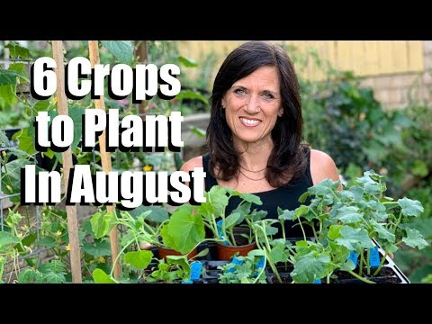 , title : '6 Crops to Plant in August for Late Summer Harvest 🌿🍅🥒