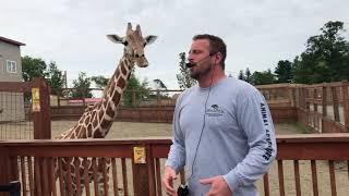 April the Giraffe Best Jordan Patch talk Tajiri Steals the Show