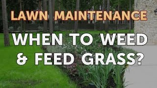 When to Weed & Feed Grass?