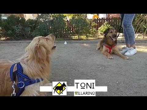 Valentín Y Matilda. Adiestramiento canino en Barcelona y Baix Llobregat ( Sin Castigos )