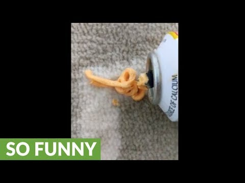 Dog chews on can of squeeze cheese, causes hilarious malfunction