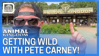 GETTING WILD AT ANIMAL KINGDOM WITH PETE CARNEY