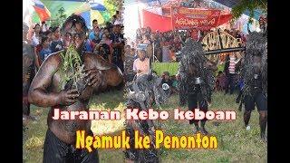 Gambar cover Jaranan Kebo keboan Ngamuk ke Penonton,Buyar smua-Bersih Desa Cluring Banyuwangi