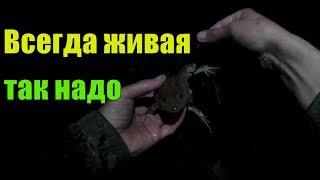 Как цеплять лягушку на крючок для ловли сома