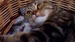 Mommy Cat Hugs her Baby Kitten. Cutest Cat Moments.