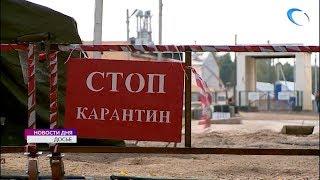 В Солецком районе отменен карантин по африканской чуме свиней