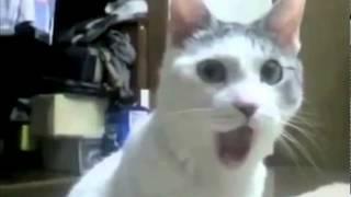 удивлен кошки
