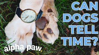 Can Dogs Tell Time?!