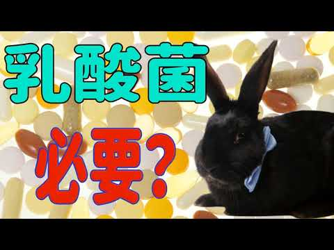 , title : '【うさぎに乳酸菌サプリは必要か】プロが教えるサプリメントの真実: うさぎの食事 Vol.7