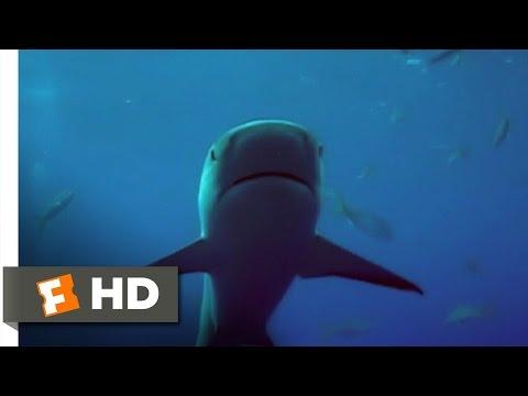 Open Water (9/11) Movie CLIP - Bitten (2003) HD