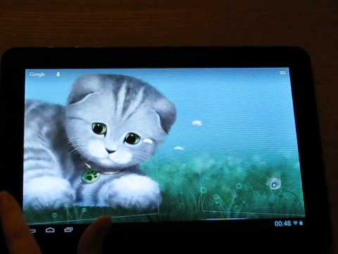 Video of Silvery the Kitten HD