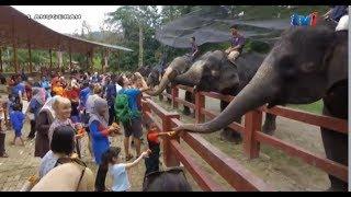 Pusat Gajah Kuala Gandah RTM TV1 1Anugerah Malaysian Elephants Tourism Malaysia