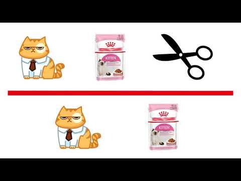 Как определить, что у кошки ожирение