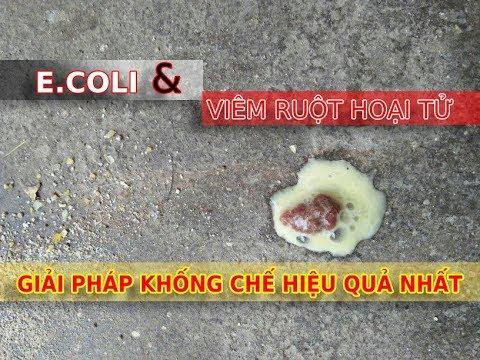 E.coli và viêm ruột hoại tử ở Gà, Vịt, Chim | Giải pháp khống chế hiệu quả nhất