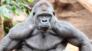 10 Most Powerful Creatures In The World!