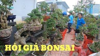 BonsaiHP/Hỏi Giá Bonsai Lô Duối-hoa Giấy-mai Chiếu Thủy đẹp