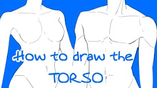How To Draw TORSOS + GIVEAWAY!