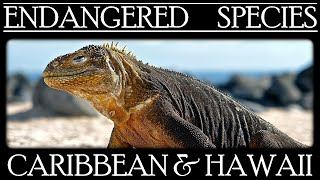 Endangered Species in North American islands