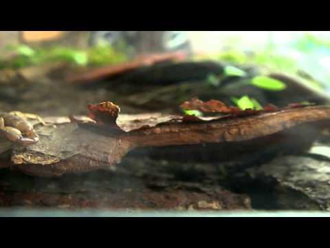 Das Öl der Samen lna und die Parasiten