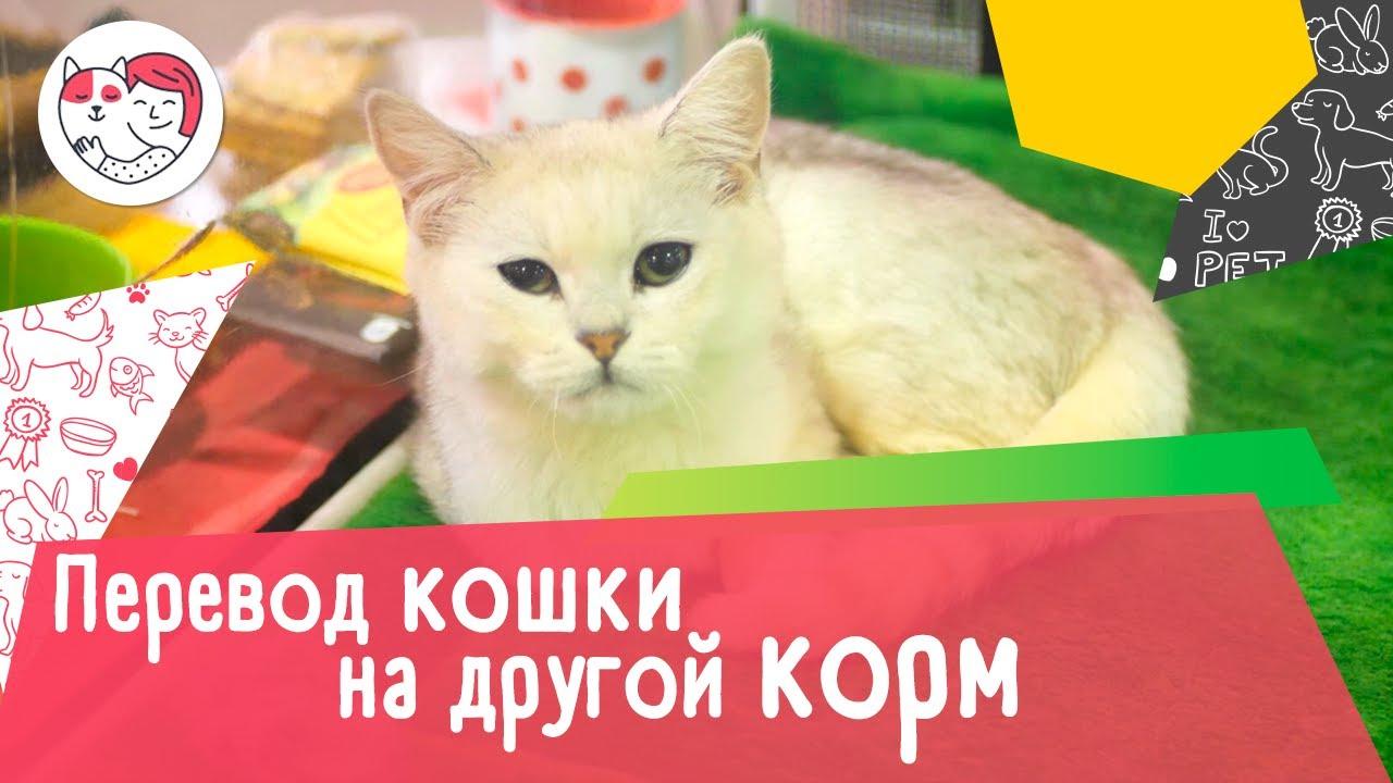6 случаев, когда кошку нужно переводить на другой корм