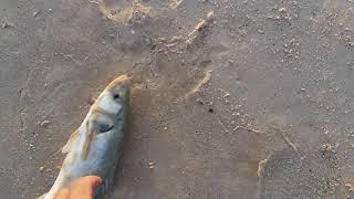Ловля лаврака в средиземном море