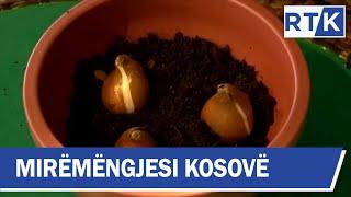 Mirëmëngjesi Kosovë - Kronikë - Kujdesi i luleve 07.12.2019