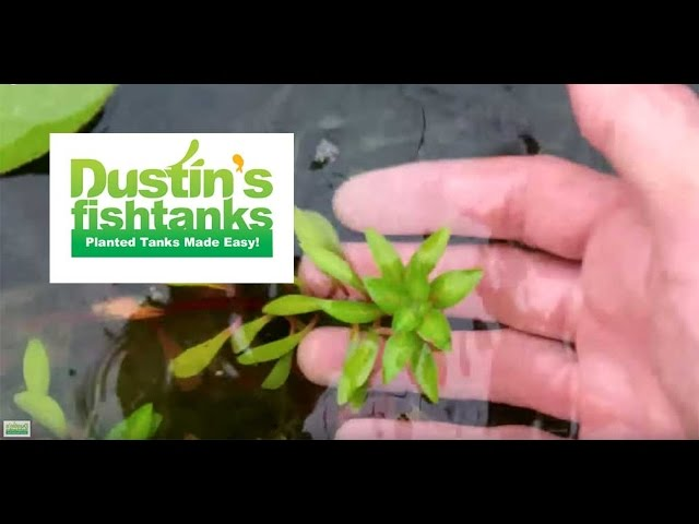 How to: Maintenance in Garden pond; greenhouse tank update, algae in top pond