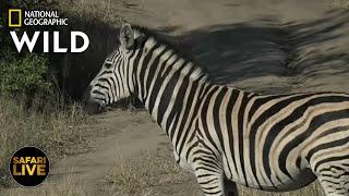 Safari Live - Day 359   Nat Geo Wild