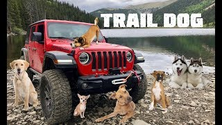 What's the Best Trail Dog for Jeep Adventures in Colorado?!