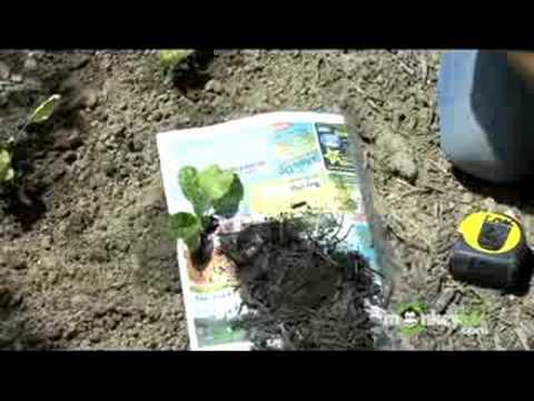 Organic Gardening – Weed Control