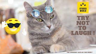 Cute and funny cat videos -Tik Tok #70