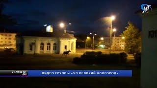 По Великому Новгороду сегодня ночью гулял лось