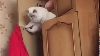 Unglückliche Katze / Unlucky cat / Невезучий кот
