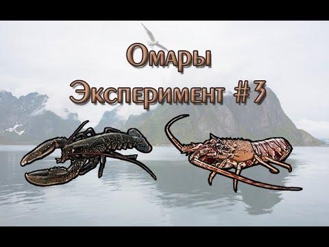 Русская Рыбалка 3.99 (Russian Fishing) Омары. Эксперимент #3