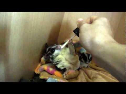 วิธี Giardia parasep