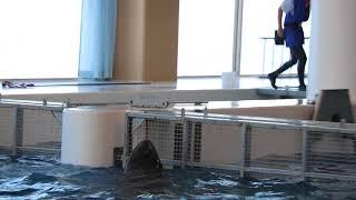 18070290アクアワールド大洗収容所:2金網とオキゴンドウ2