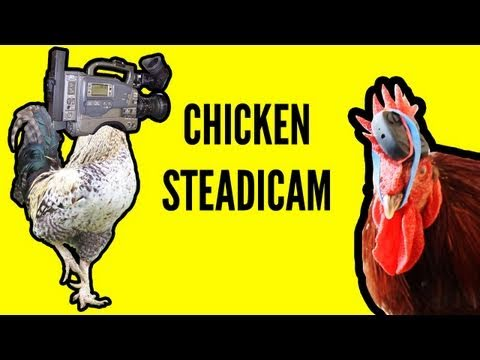 Proof That Chickens Make The Best Steadicams