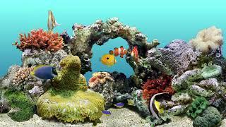 Aqua Real 🐠 12 HR Water Bubbles Sound & Coral Reef 🐠 Virtual Aquarium
